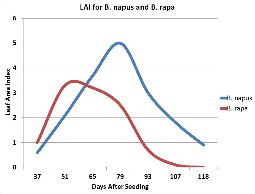 LAI for B. napus and B. rapa (graph)