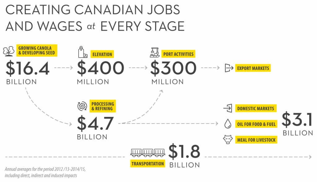 Graphic showing how different parts of the canola industry contribute to the Canadian economy