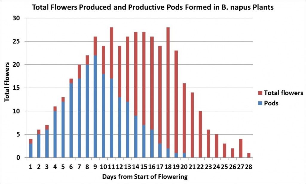 Total B. napus  flowers and pods formed over time (graph)