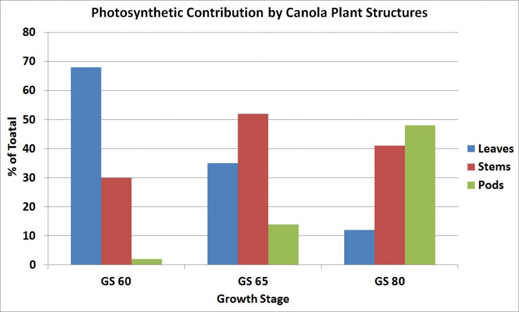 Photosynthetic contribution by canola plant structures (graph)