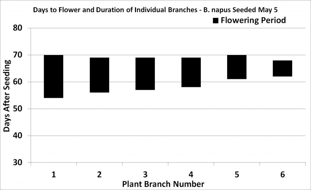 B. napus flowering progression (graph)