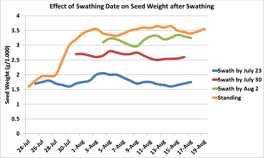 Effect of swathing date on seed weight after swathing