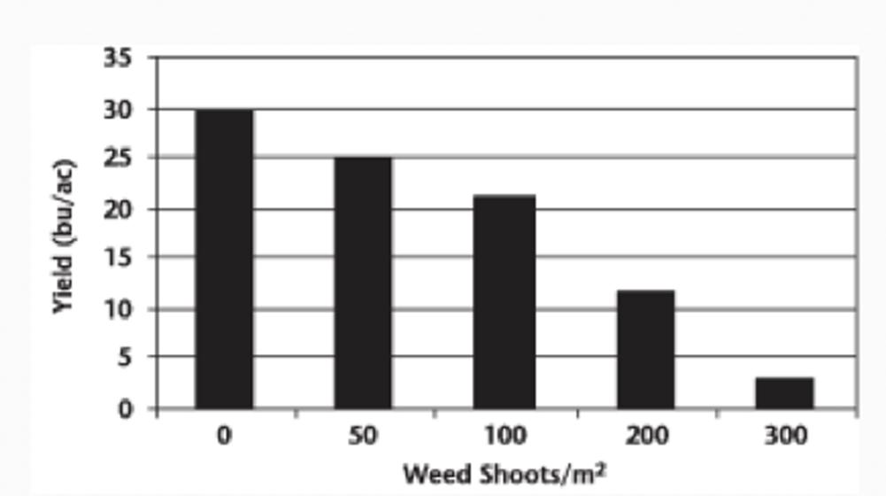 Yield of canola under quackgrass pressure