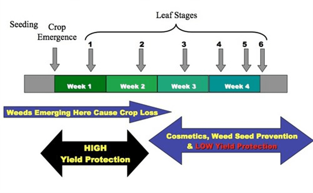 Control weeds early (infographic)