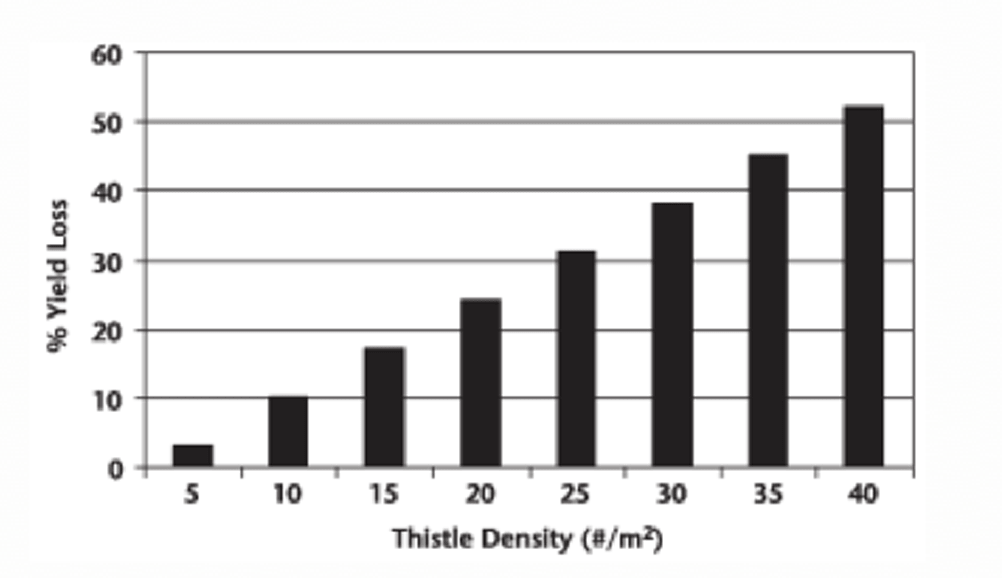 Estimated yield losses of canola caused by Canada thistle (graph)
