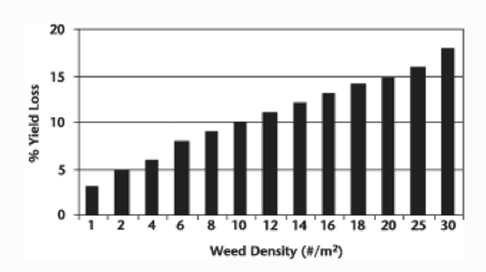 Yield losses in canola caused by wild oats