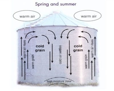 As outside air warms up, moisture migration cycles in the bin can concentrate warm moist air, creating a potential start point for spoilage. Warm up stored canola to break these cycles.