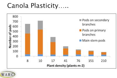 Canola plasticity WARC