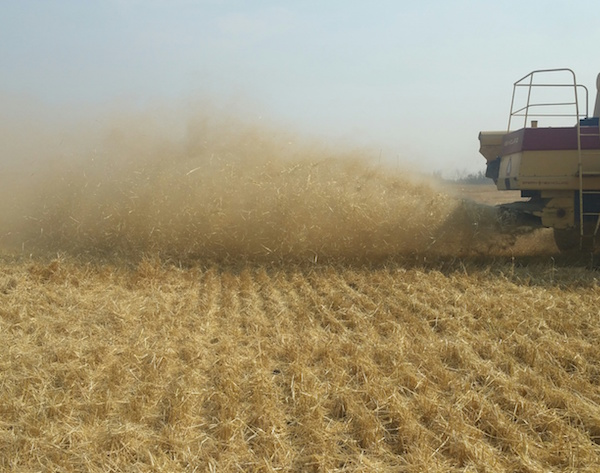 Shawn Senko's combine looks to be producing an even spread of residue.