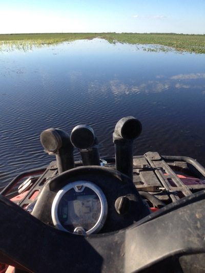 Flooded canola near Brandon, Manitoba.