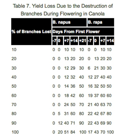 Yield loss will be lower if hail hits before flowering than at late flowering. Source: Canola Growers Manual