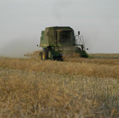 Harvest canola combine