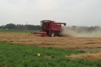Harvesting small