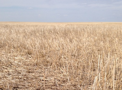 Spread cereal residue evenly and chop it well to improve seed placement next spring.