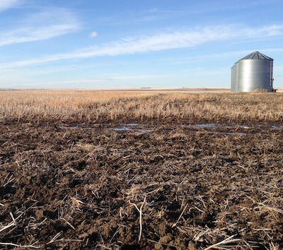 Justine bare field in March small