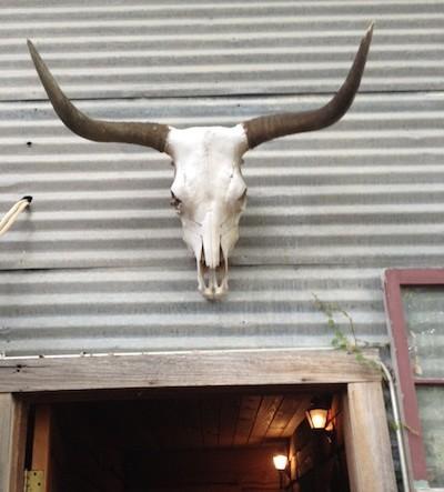 Longhorn bull skull copy
