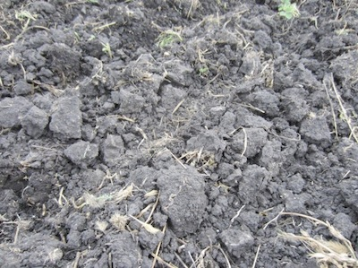 Alfalfa ground left a less than ideal seed bed for canola.  Anastasia Kubinec mentioned we would need some rain to soften things up and keep the seedbed from really drying up.