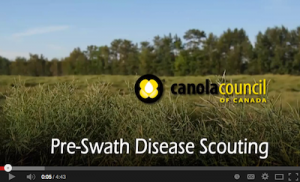 Pre-swath disease scouting