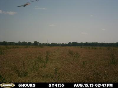 August 15 SY4135 plot.
