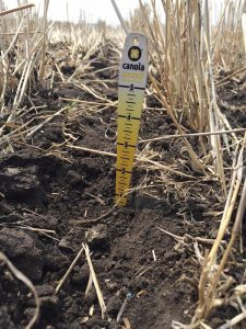 "Aim for a seeding depth of less than 1"". Credit: Justine Cornelsen"