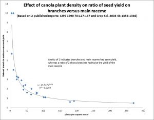 With fewer plants, a higher ratio of seeds comes from side branches. (Click image to enlarge.)