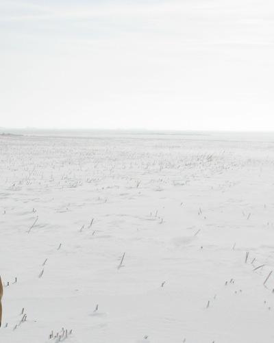 Snow on fields