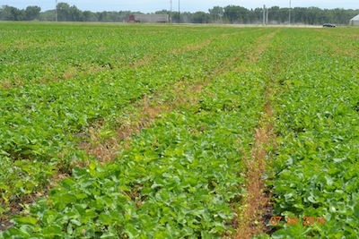 Here's a look at the alfalfa control.