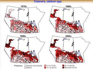 Cleavers movement across the Prairies. Source: Hugh Beckie, AAFC