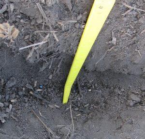 cw2-image-crop-establishment-ungerminated-seed-within-furrow-1-brocke