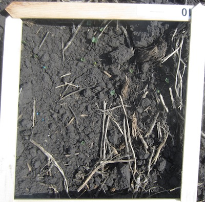Broadcast 5440 had less consistency in plant counts, ranging from 4 to 24 plants per square foot over the 9 counts.
