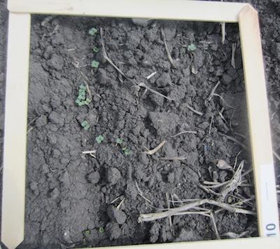 L154 plant counts.