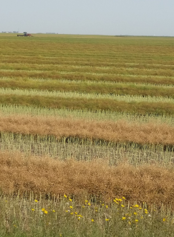 swathing Philp small