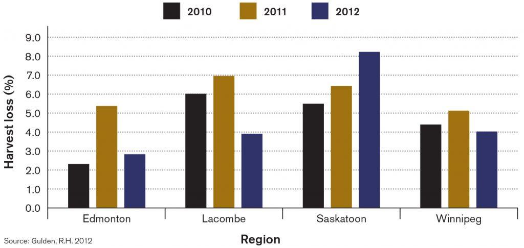 Total canola harvest losses (Gulden study)