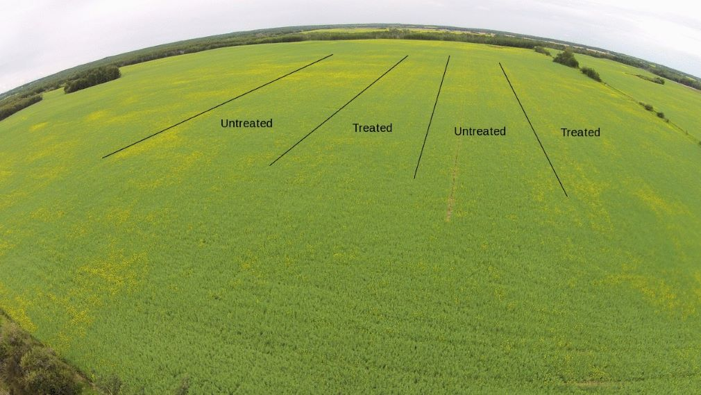 2015 Ultimate Canola Challenge trial
