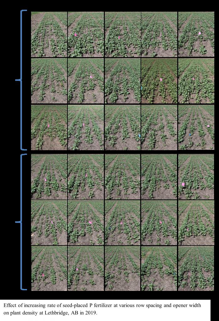 Mooleki phosphorus study image