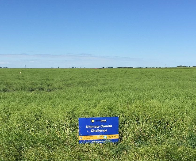 Ultimate Canola Challenge sign in canola field