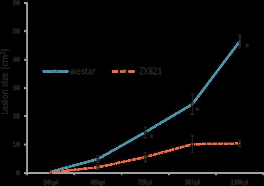Fernando 2013-12 graph (sclerotinia)