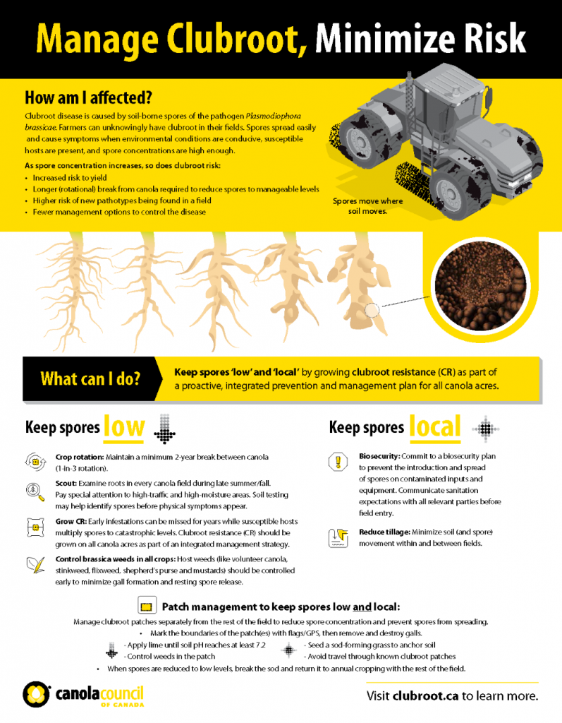Clubroot management factsheet (where clubroot is established)